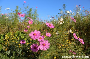 Wildflowers, Twickenham
