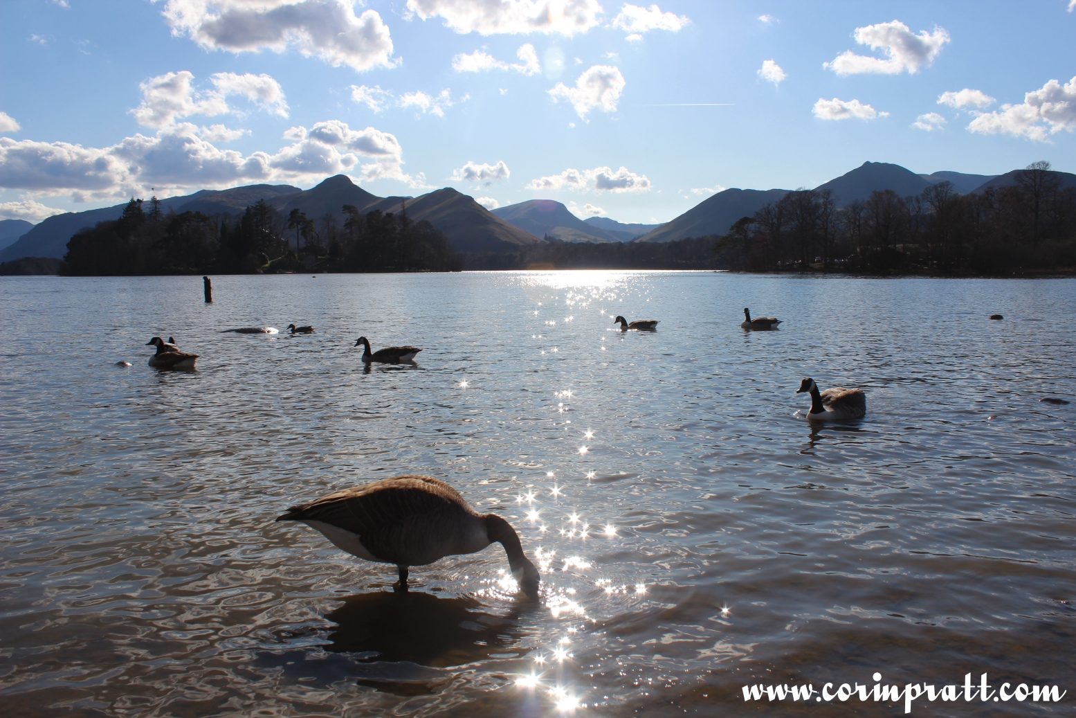 Geese, Derwentwater, Lake District