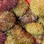 Sea Urchins, La Boqueria, Barcelona