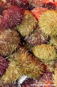 Sea Urchins, La Boqueria, Barcelona