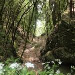 Woodland, Il Sentiero degli Dei