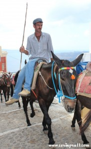 Donkey, Fira, Santorini