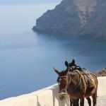 Donkeys, Thirassia, Santorini