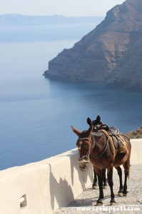 Donkeys, Thirassia, Santorini