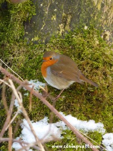 Robin near Skelwith Bridge, Lake District