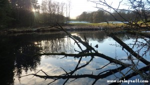 Deadwood in the River Brathay, Lake District