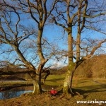 Trees by the River Brathay, Lake District