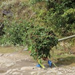 A mobile bush with blue wellies in Yuksom/Yuksum, Sikkim, India