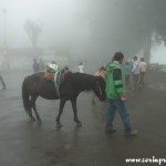 Donkey rides in the mist/cloud, Darjeeling, india