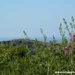 Coastal Scenery, Cornwall