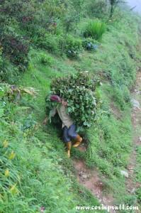 Field worker, Ravangla, Sikkim, India