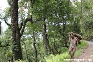 Man carrying wood, Sikkim, India