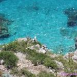 Gulls, Turquoise Water, Capri, Italy