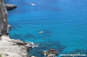 Coast, Gull, Capri, Italy