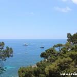 Coast, Trees, Capri, Italy